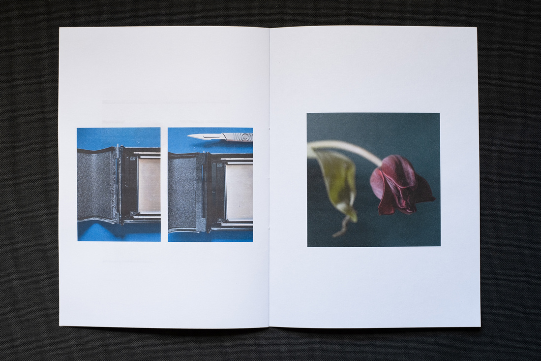 Photograph of a homemade Zine about April 2021, photographed on a dark grey background. Shown here is a double page spread with photographs of part of a Mamiya RB67 back with damaged seal to the far left, repaired seal (and a craft knife above) to the left and a dying tulip to the right.