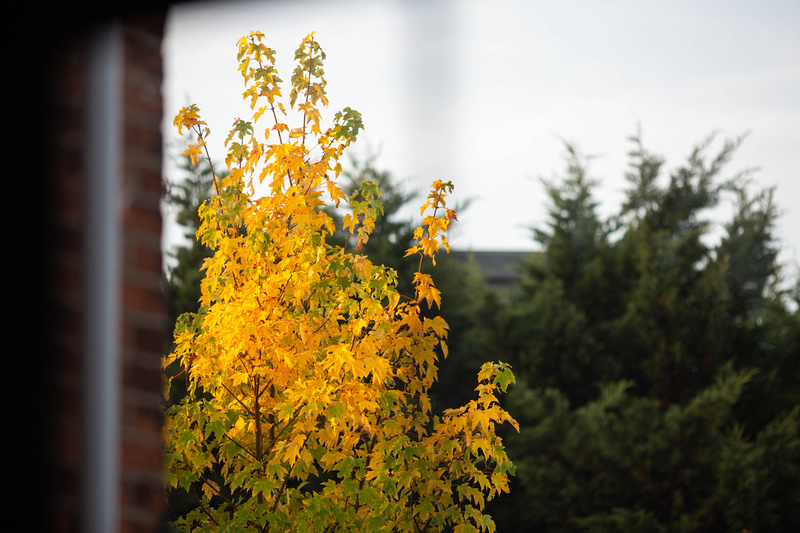 View from the window as seasons change