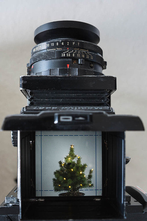 Photographing a small Christmas tree with a Mamiya RB67.