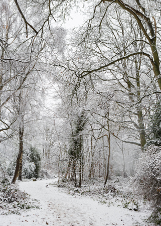 Snowy woodland in Colchester.