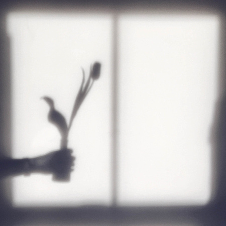 Shadow of a hand holding a tulip in a vase